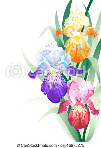 Vector greeting card with violet, orange and vinous Iris flowers on ...