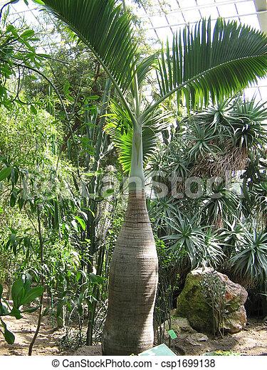 images de exotique arbre une exotique arbre dans les botanique csp1699138. Black Bedroom Furniture Sets. Home Design Ideas