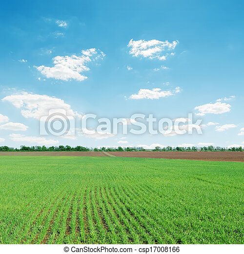 light clouds over green agriculture field - csp17008166