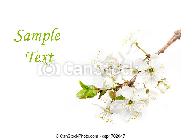 spring flowers over white - csp1702047