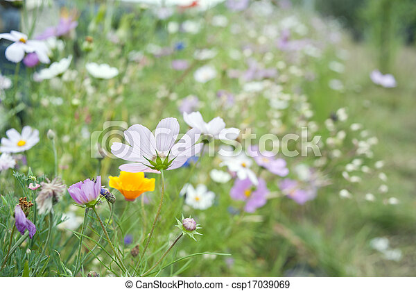 Wild flowers blooming