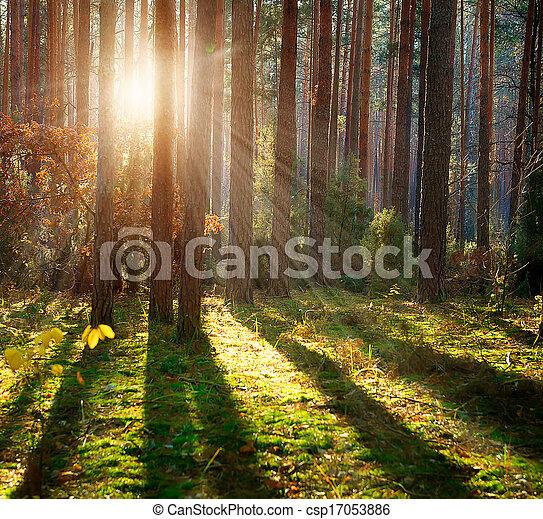 bosque, brumoso, otoño, bosque, viejo - csp17053886