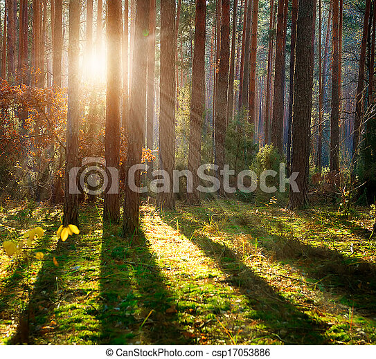 skog, dimmig, höst, Veder, gammal - csp17053886
