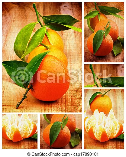 Collection of Tangerine - csp17090101