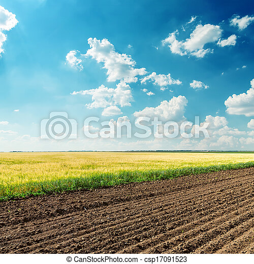 agriculture fields under deep blue cloudy sky - csp17091523