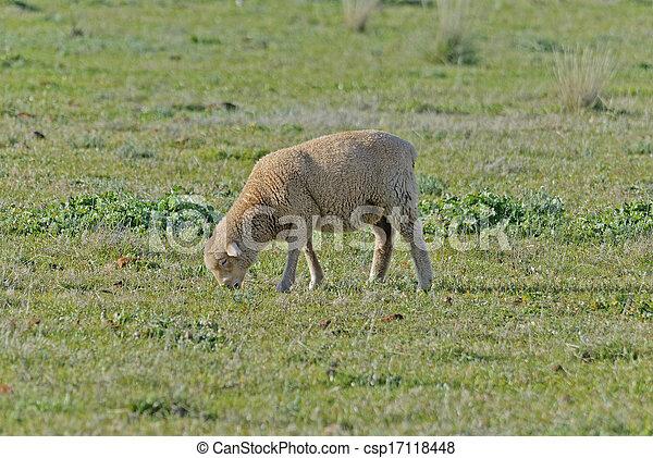 mammal - csp17118448