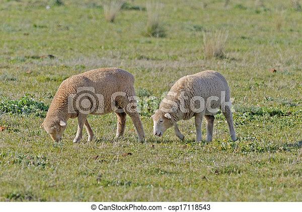 mammal - csp17118543