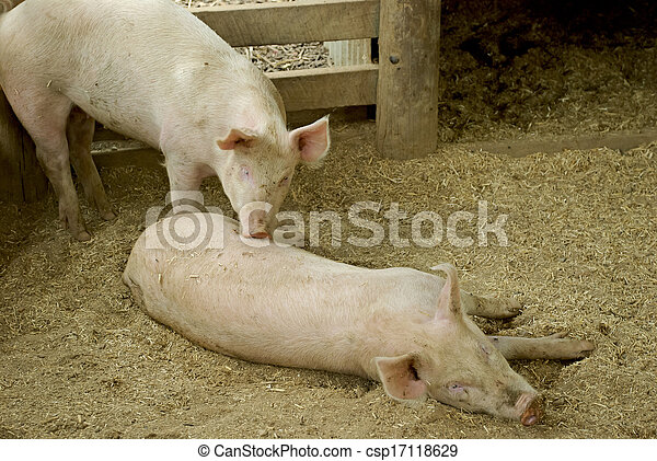 mammal - csp17118629