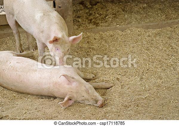 mammal - csp17118785