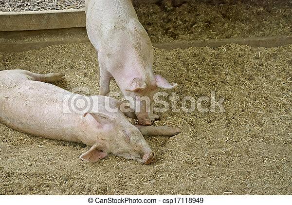 mammal - csp17118949