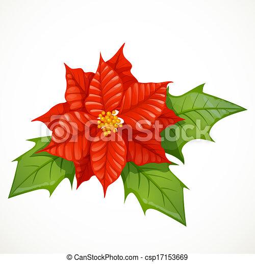 clip art vecteur de houx blanc fleur isol233 fond houx
