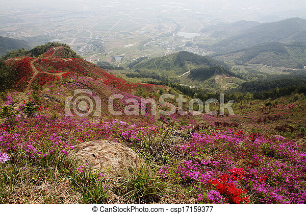 vacker,  Mountains, syd,  Korea, Azaleor - csp17159377