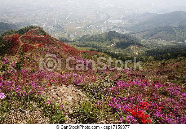 vacker,  Mountains, syd,  Korea, Azaleor - csp17159377