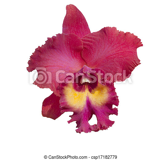 di-cut beautiful single red tropical orchid flower isolated on white background use for natural object docoration  - csp17182779