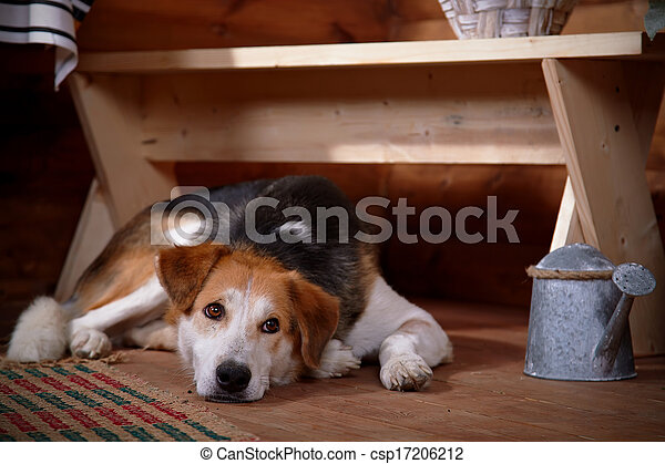 The sad dog lies under a bench in the rural house. - csp17206212