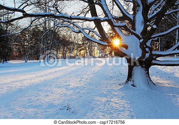 Alone tree in winter park. - csp17216756