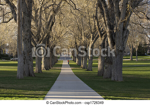 Allee with old American elm trees - the Oval at Colorado State University campus in early spring - csp1726349
