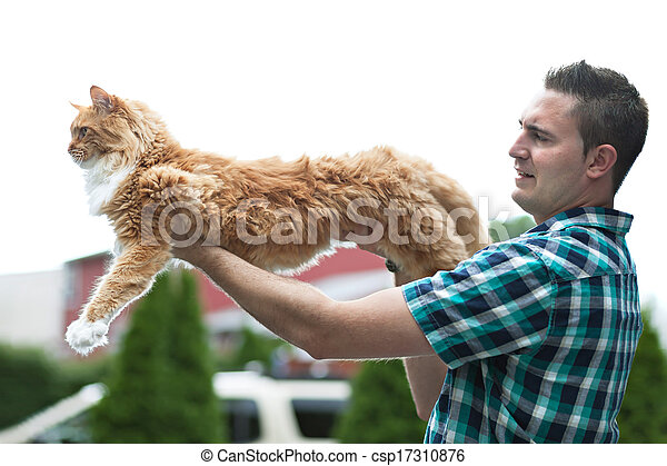 Picture of Yellow Maine Coon Cat - Man holding his cherished ...