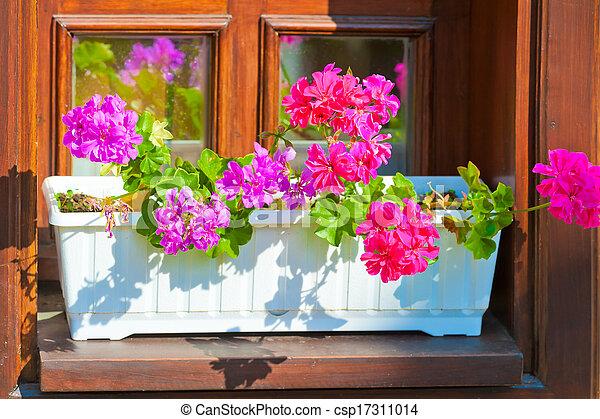 stock fotografie von pflanzer rosa blumen fensterbank. Black Bedroom Furniture Sets. Home Design Ideas
