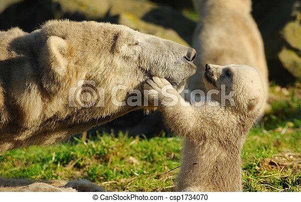 polar bear and cub - csp1734070