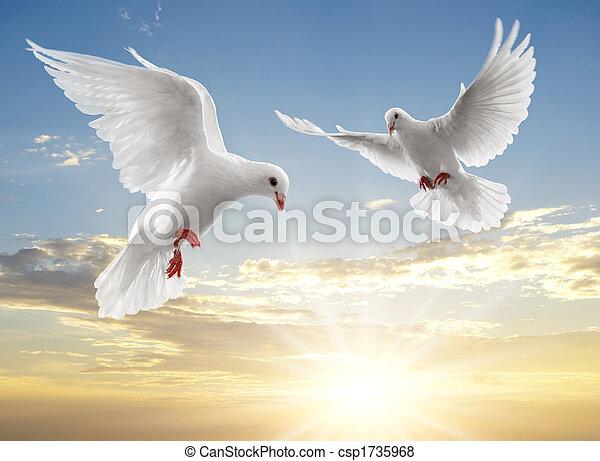 zwei, Tauben - csp1735968