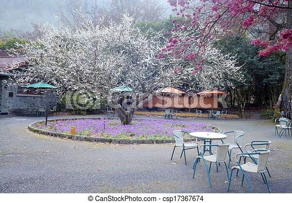 The sakura season of Taiwan - csp17367674