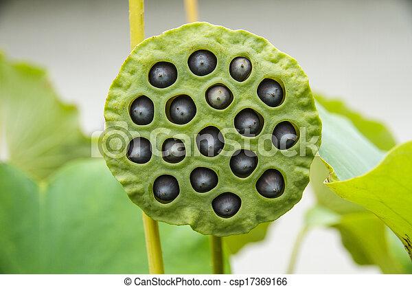 image de lotus graine lotus feuille et fleur vert fond csp17369166 recherchez des. Black Bedroom Furniture Sets. Home Design Ideas