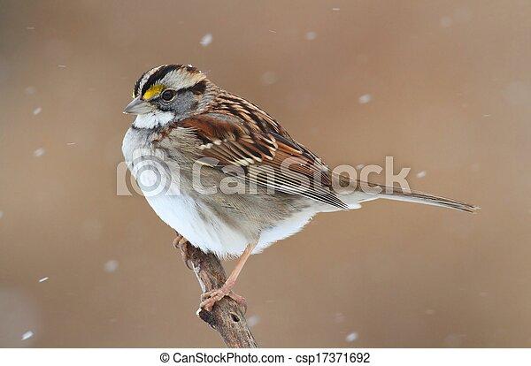 Bird In Snow - csp17371692