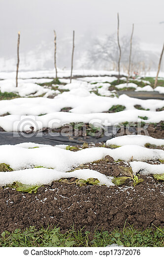 snow on the plowed agriculture field - csp17372076