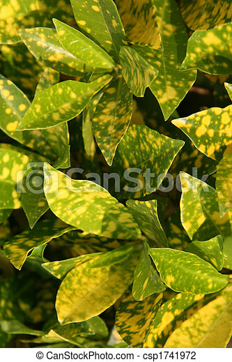 Green / Yellow Leaves - Eden Gardens, Kolkata, India - csp1741972