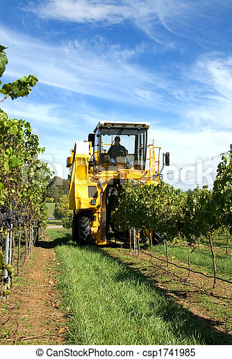Harvesting Grapes - csp1741985