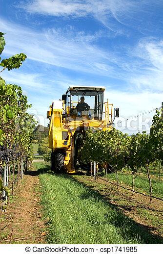 Harvesting Grapes - csp1741985