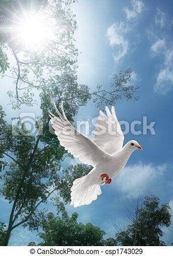 white dove flying - csp1743029