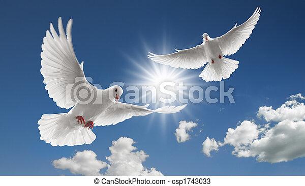 fliegendes, zwei, Tauben - csp1743033