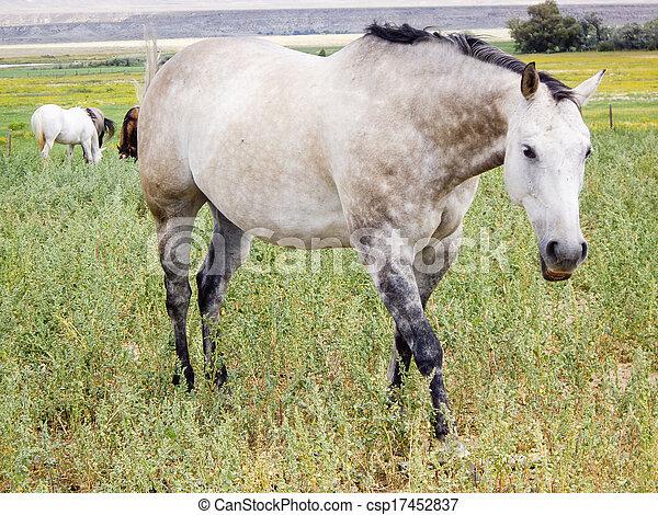白, ぶちである, 子馬 - csp17452837 白, 子馬, montana, 牧草地お気