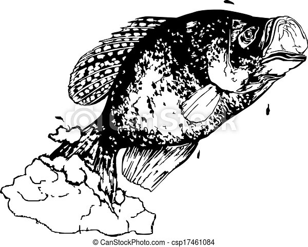 Vector of crappie line drawing of crappie vector for Big fish screen printing