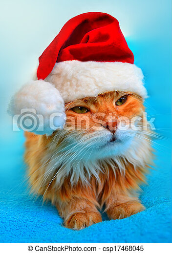Funny cat in Santa Claus red hat