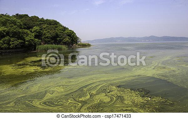 polluted water of Taihu lake - csp17471433