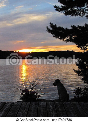 Sunset and Dog - csp17494736