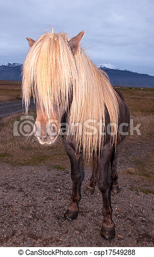 Icelandic Horse with impressing mane