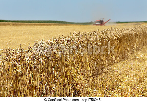 Agriculture, wheat harvest - csp17562454