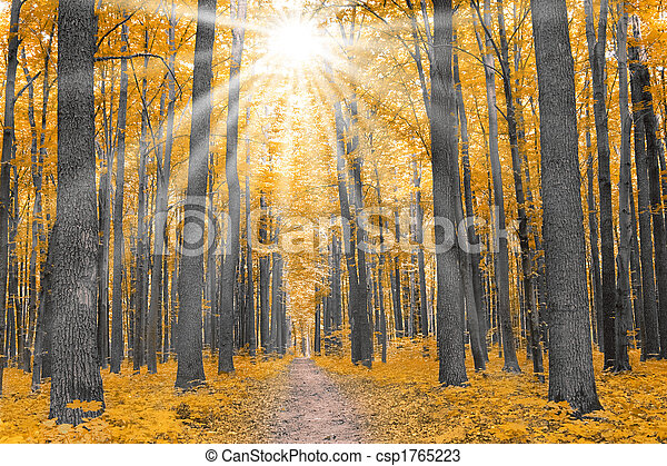 Outono, natureza, floresta - csp1765223