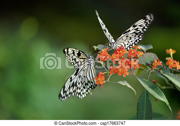 Beautiful butterfly on red flowers  - csp17663747