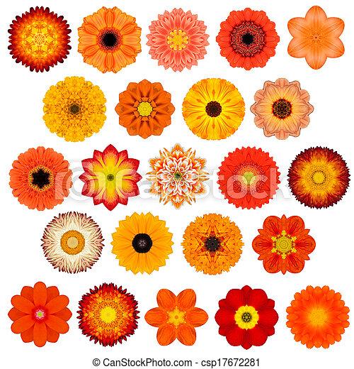 ... Daisy, Primrose, Sunflower, Carnation, Marigold, Gerber, Dahlia Zinnia
