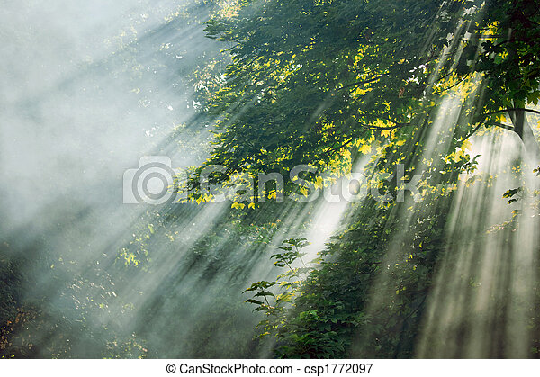 mystical sunlight rays in trees - csp1772097