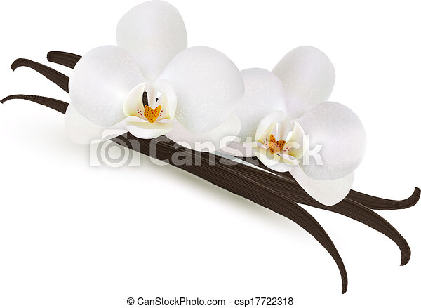. Vector. - stock illustration, royalty free illustrations, stock ...: www.canstockphoto.com/vanilla-vector-17722318.html