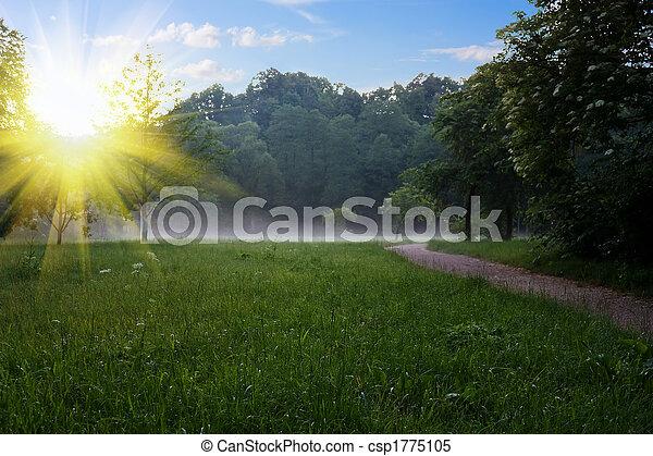 sunrise at the summer park - csp1775105