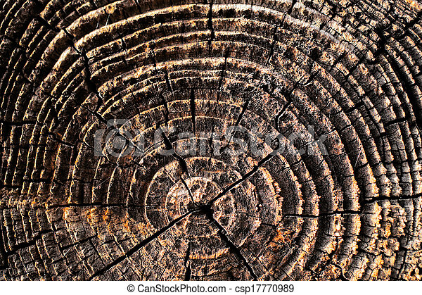 Natural details of sun dried wood - csp17770989