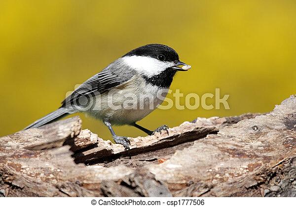 Bird On A Stump In Spring - csp1777506