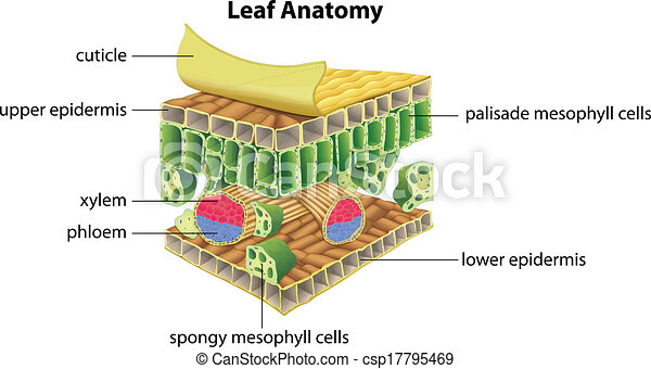 does photosythesis take Carbon dioxide in photosynthesis plants get carbon dioxide from the air through their leaves the carbon dioxide diffuses through small holes in the underside of the.